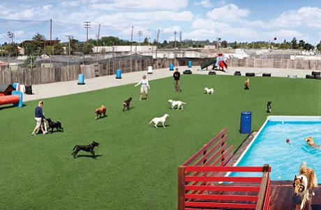 Pet Friendly and Durable Artificial Grass