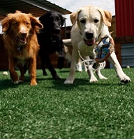 Dogs Runs and Dog Parks