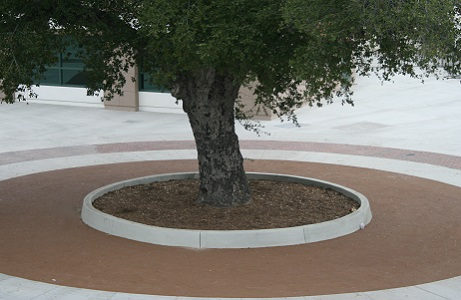 Rubberway rubber tree wells are pervious and flexible and save trees that provide shade