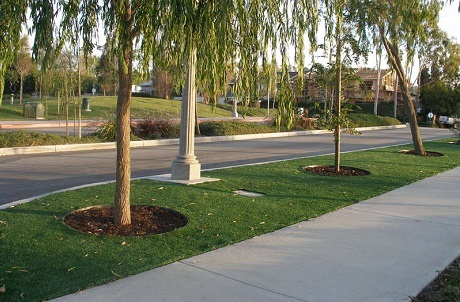 Natural Looking Synthetic Turf for City Medians and Streetscapes
