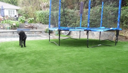 Artificial Turf is Used For Dogs and Backyard