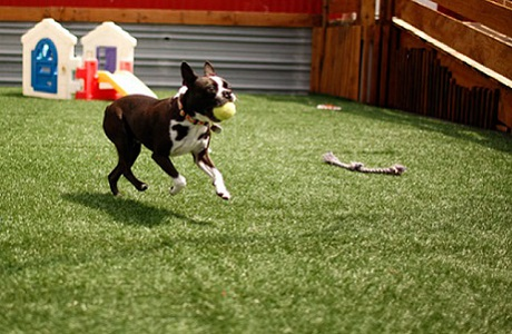 Synthetic Turf Dog Daycare