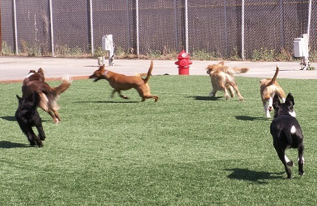 Artificial Turf Dog Park