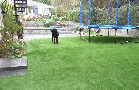 Artificial Turf for Dogs and Backyard Landscaping